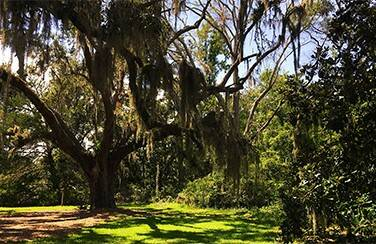 Gallery-1-Lowcountry-1640-x-923